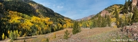 March of the Aspen As september wanes the aspens along the Engineer Pass