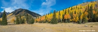 Out of Thin Air Alpine meadow and aspen in fall colors along Engineer